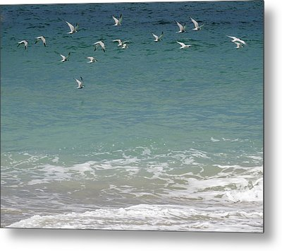 Gulls Flying Over The Ocean Metal Print by Zina Stromberg