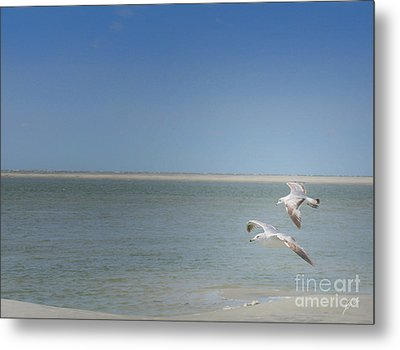 Metal Print featuring the photograph Gulls In Flight by Erika Weber