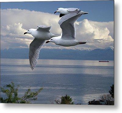 Gulls In Flight Metal Print by George Cousins