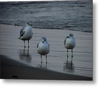 Gulls Night Out Metal Print by Kimberly Mackowski