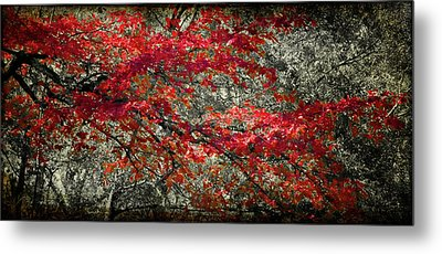 Gum Fall Metal Print by Lana Trussell