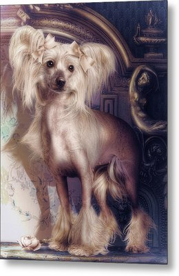 Hair Less Chinese Metal Print by Cindy Grundsten