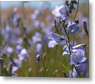 Metal Print featuring the photograph Harebells by Jenessa Rahn