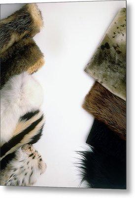 Hairseal Fur Metal Print by Dorling Kindersley/uig