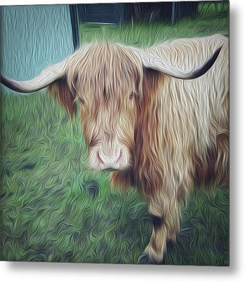 Hairy Cow Metal Print by Les Cunliffe