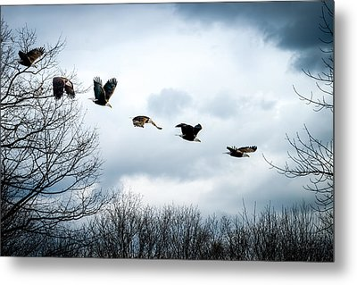 Half Second Of Flight Metal Print