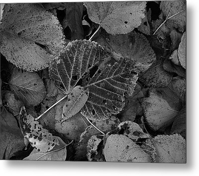 Halloween Leaves Metal Print by Tim Good
