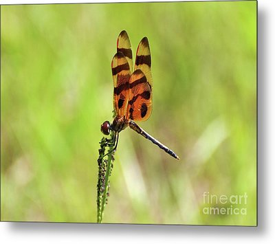Halloween Pennant Metal Print by Al Powell Photography USA