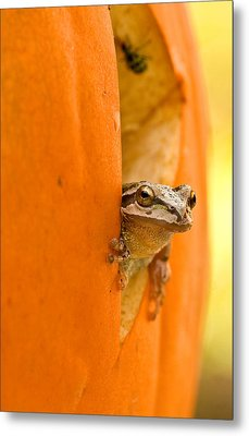 Halloween Surprise  Metal Print by Jean Noren