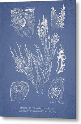 Halymenia Formosa And Eucheuma Spinosum Metal Print by Aged Pixel
