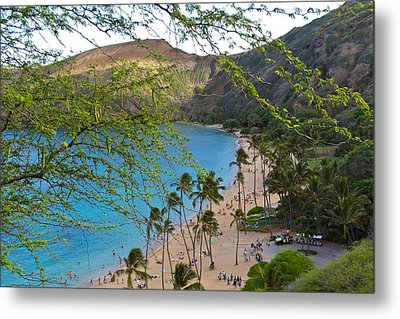 Hanauma Bay Nature Preserve Beach Through Monkeypod Tree Metal Print by Michele Myers