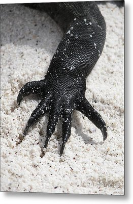 Metal Print featuring the photograph Hand Of A Marine Iguana by Liz Leyden
