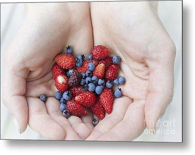 Hands Holding Berries Metal Print by Elena Elisseeva