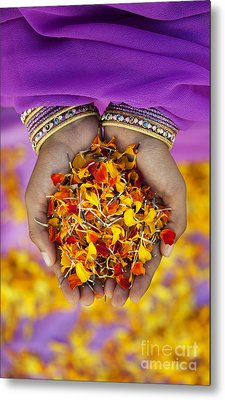 Hands Holding Flower Petals Metal Print by Tim Gainey