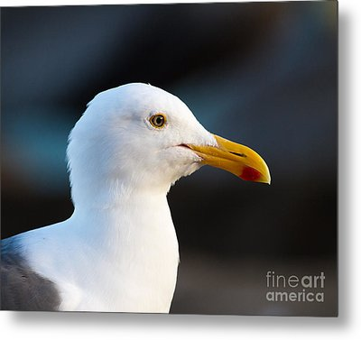 Metal Print featuring the photograph Handsome Gull by Dale Nelson