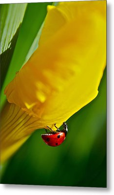 Hang On Metal Print by Bill Owen