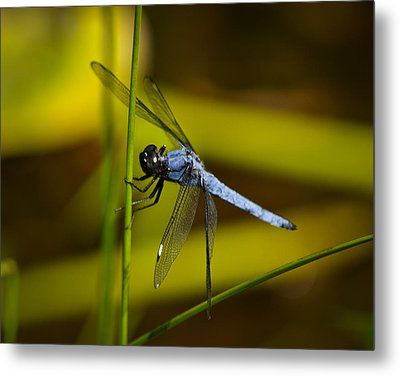 Hang On Metal Print by Mary Zeman