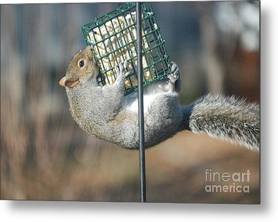Metal Print featuring the photograph Hangin Out by Mark McReynolds