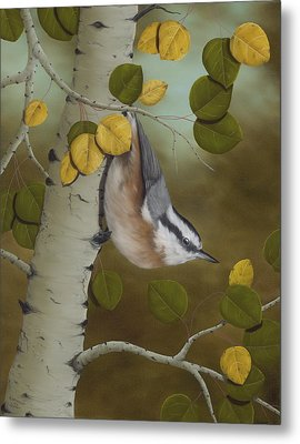 Hanging Around-red Breasted Nuthatch Metal Print by Rick Bainbridge