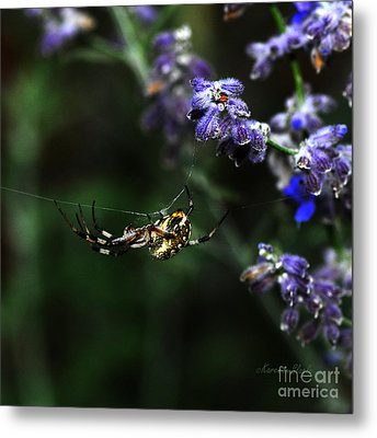 Metal Print featuring the photograph Hanging By A Thread by Karen Slagle