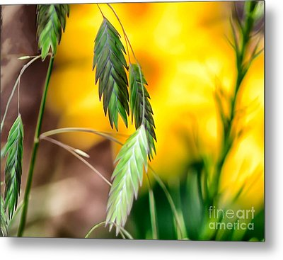 Hanging In Metal Print by JRP Photography
