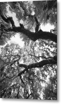 Metal Print featuring the photograph Hanging Moss by Bradley R Youngberg