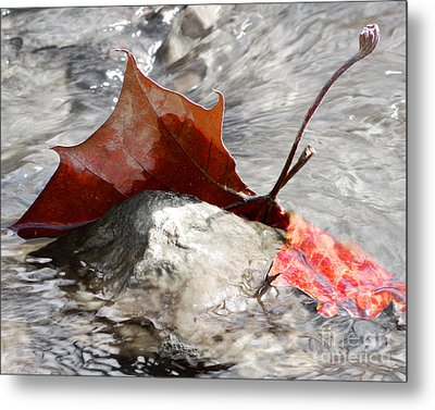 Metal Print featuring the photograph Hanging On By Faith by Anita Oakley