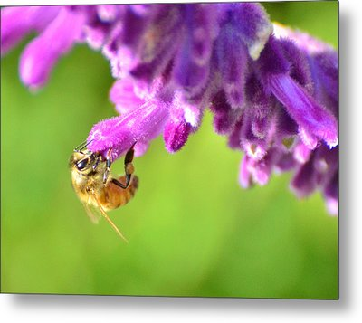 Metal Print featuring the photograph Hanging On For Dear Life by Debby Pueschel