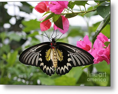 Hanging On Metal Print by Judy Whitton