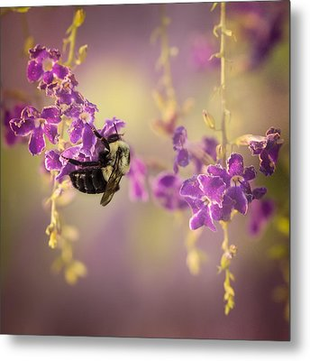 Hanging On Metal Print by Maria Robinson