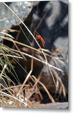 Metal Print featuring the photograph Hanging On by Michele Myers