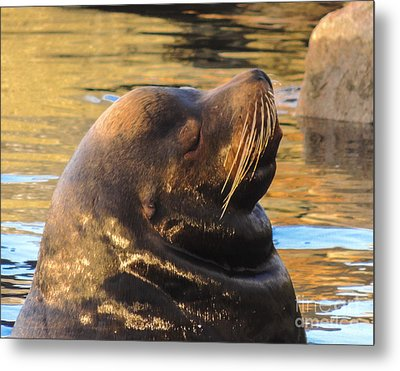 Happy And Content Metal Print