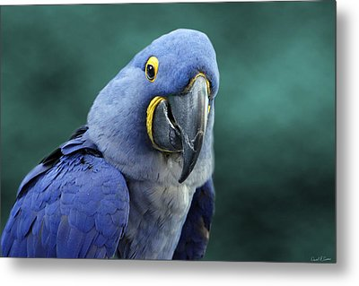 Happy Bird Metal Print by David Simons