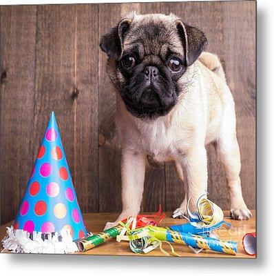 Happy Birthday Cute Pug Puppy Metal Print by Edward Fielding