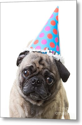 Happy Birthday Pug Card Metal Print by Edward Fielding