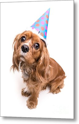 Happy Birthday Puppy Metal Print
