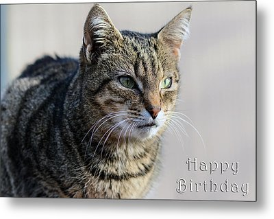 Happy Birthday Tabby Metal Print