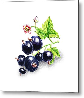 Happy Blackcurrant  Metal Print by Irina Sztukowski