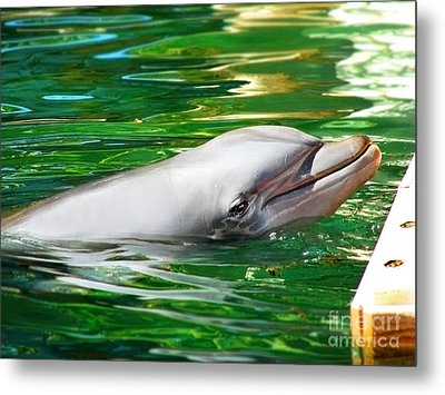 Happy Dolphin Metal Print by Kristine Merc
