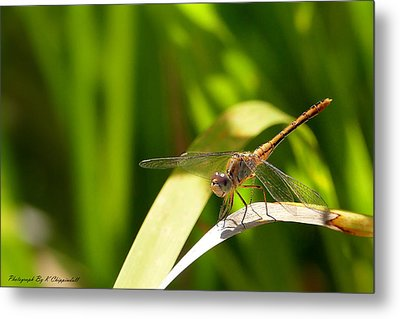 Happy Dragonfly 01 Metal Print