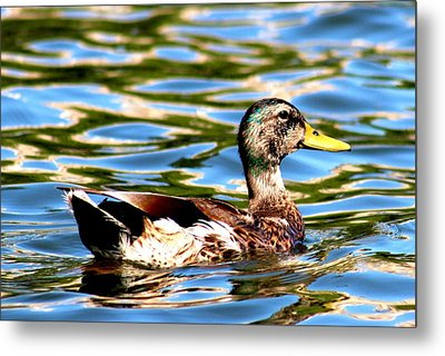 Happy Duck Metal Print