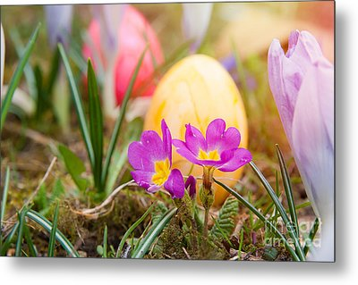 Metal Print featuring the photograph Happy Easter by Christine Sponchia