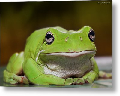 Happy Frog 0003 Metal Print by Kevin Chippindall