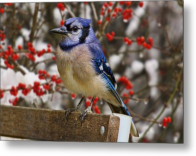 Metal Print featuring the photograph Happy Holidays by Gary Holmes