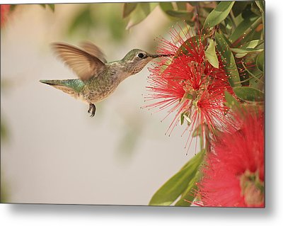 Happy Humming Metal Print by Penny Meyers