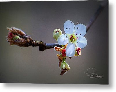 Metal Print featuring the photograph Harbinger Of Spring by Ludwig Keck