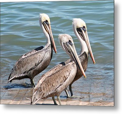 Metal Print featuring the photograph Harbor Masters by Dick Botkin