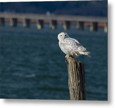 Harbor Sentry Metal Print by Stephen Flint