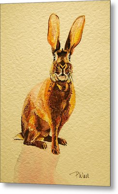 Hare Metal Print by Pattie Wall