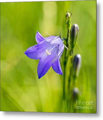 Harebell Metal Print by Dee Cresswell